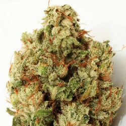 GREEN NINJA (10) 100% HEAVYWEIGHT SEEDS
