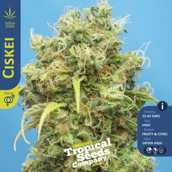CISKEI (10) REGULAR TROPICAL SEEDS
