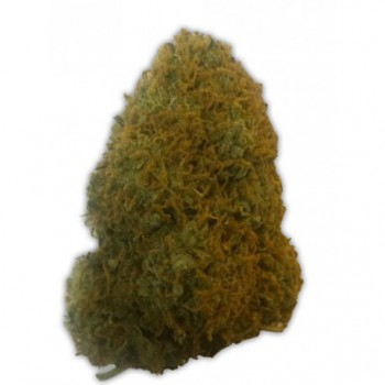 CHAMPIONS CHEESE (10) 100% HEAVYWEIGHT SEEDS