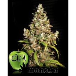MONSTER (9) 100% EVA SEEDS