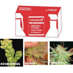 COLECCION 1 PR/S.DIESEL/CHAN 100% MEDICAL SEEDS