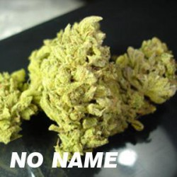 NO NAME (10) 100% MEDICAL SEEDS
