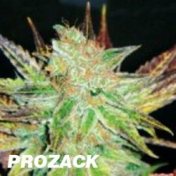 PROZAC (3) 100% MEDICAL SEEDS