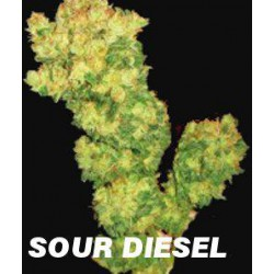 SOUR DIESEL (5) 100% MEDICAL SEEDS
