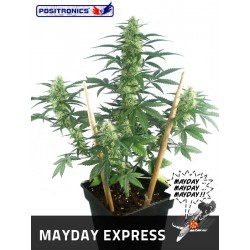 MAY DAY EXPRESS (1) AUTOFLORACIÓN 100% POSITRONICS