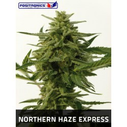 NORTHERN HAZE EXPRESS (5) 100% POSITRONICS
