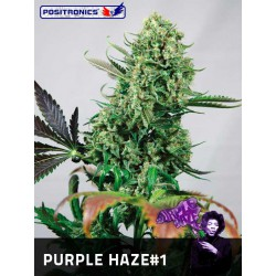 PURPLE HAZE1 (5) 100% POSITRONICS
