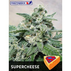 SUPER CHEESE (5)  100% POSITRONICS