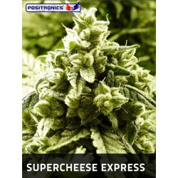SUPER CHEESE EXPRESS (5) POSITRONICS
