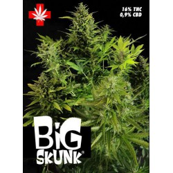 BIG SKUNK (1) 100% PURE SEEDS