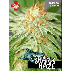 SHARK HAZE (10) 100% PURE SEEDS