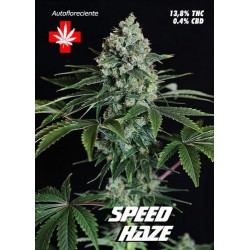 SPEED HAZE AUTOMATICA (3) PURE SEEDS
