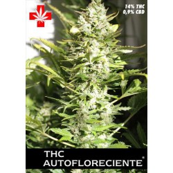 THC AUTOFLORECIENTE (5) PURE SEEDS