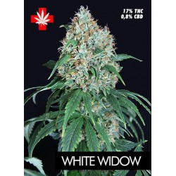WHITE WIDOW (5) 100% PURE SEEDS