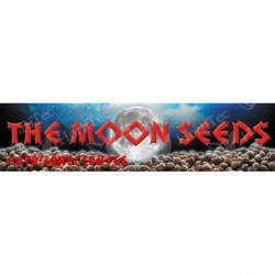 TURBO CHEESE AUTO (1) THE MOON SEEDS