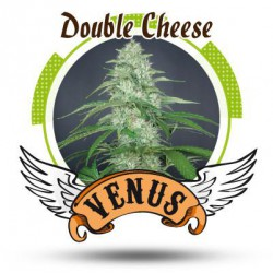 DOUBLE CHEESE (3) 100% VENUS