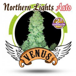 NORTHERN LIGHTS AUTO (5) 100% VENUS