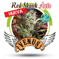 RED SKUNK AUTO (3) 100% VENUS