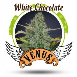 WHITE CHOCOLATE (10) 100% VENUS