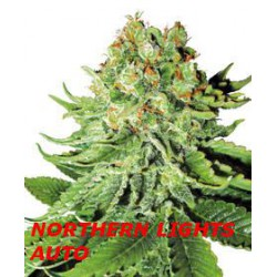 NORTHER LIGHT AUTO (5) WHITE LABEL