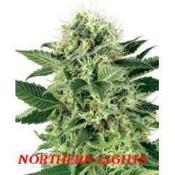 NORTHERN LIGHTS (10) 100% WHITE LABEL
