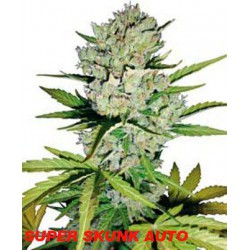 SUPER SKUNK AUTOMATICA (10) WHITE LABEL