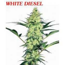 WHITE DIESEL (10) 100% WHITE LABEL