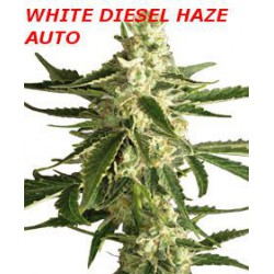 WHITE DIESEL HAZE AUTO (10) WHITE LABEL