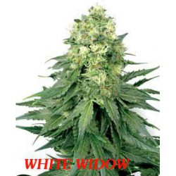 WHITE WIDOW (10) 100% WHITE LABEL