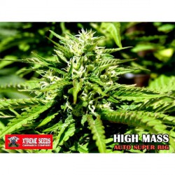 HIGH MASS (AUTO SUPER BIG) (3) 100%  XTREME SEEDS