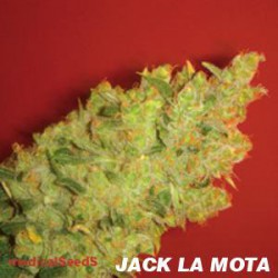 JACK LA MOTA (BLISTER 10 IND) 100%  MEDICAL SEEDS