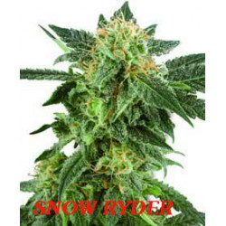 SNOW RYDER (3) 100% WHITE LABEL