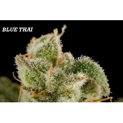 BLUE THAI (10) 100% DINAFEM