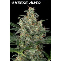 CHEESE AUTO (10) 100% DINAFEM