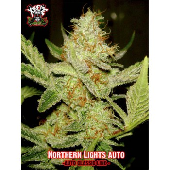 NORTHERN LIGHTS AUTO (25) 100%  XTREME SEEDS
