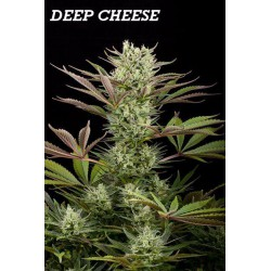 DEEP CHEESE (3) 100% DINAFEM