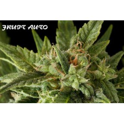 FRUIT AUTOMATIC (10) 100% DINAFEM